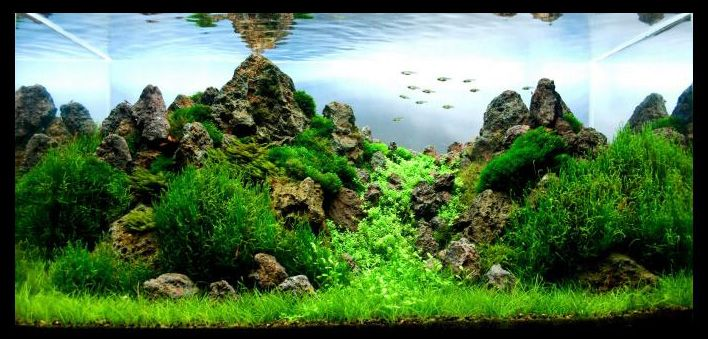 Just the look of this makes me want to move to hawaii for Planted fish tank