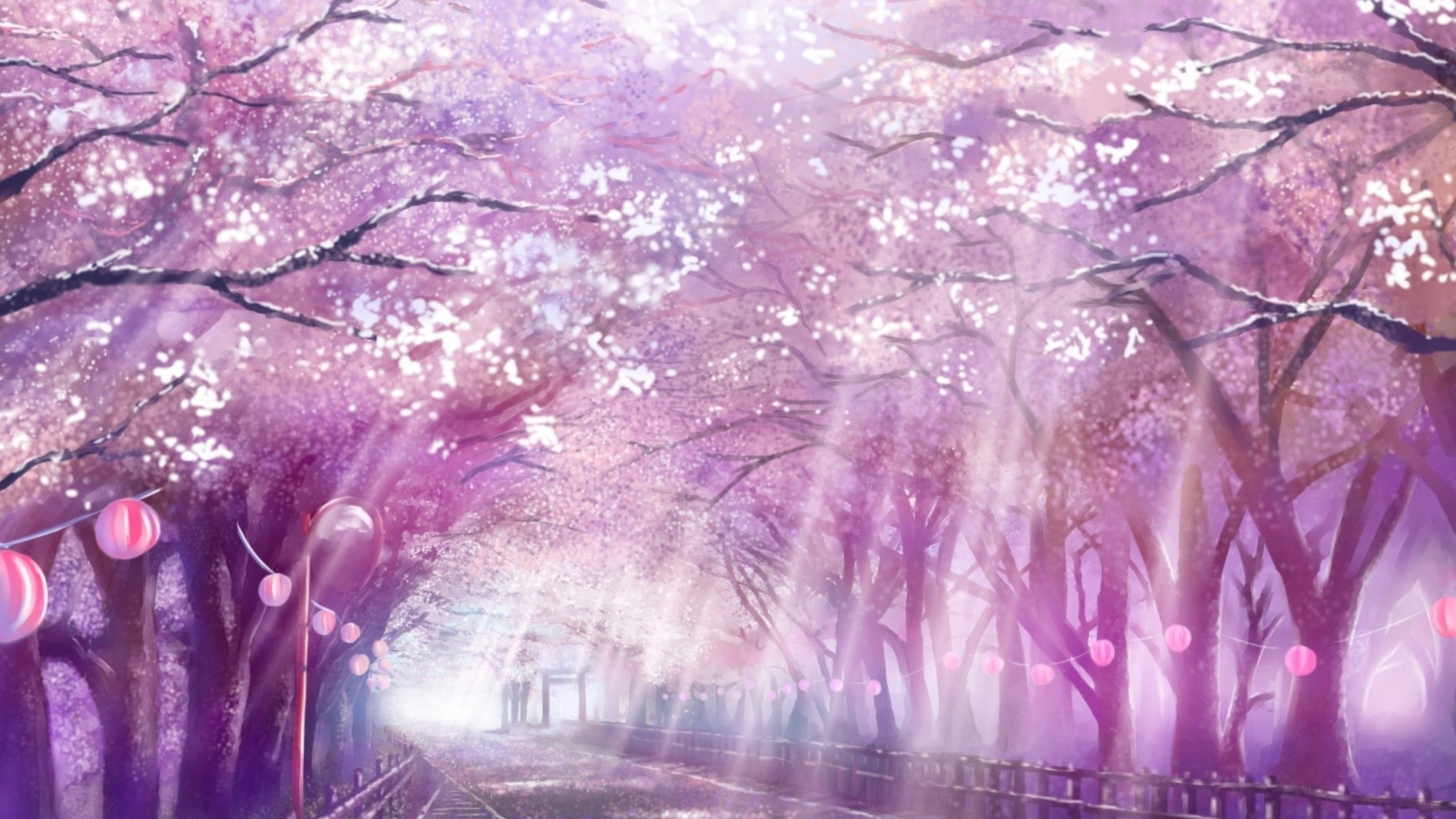 2560x1440 Anime Landscape Scenic Sakura Blossom Cherry Path Sunlight Anime Scenery Anime Scenery Wallpaper Scenery Wallpaper
