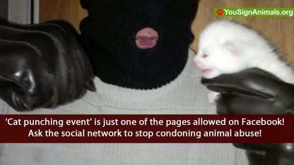 On several occasions i have tried to have pages, such as 'Cat punching event' removed from the facebook community, only to receive an email stating that the pag...