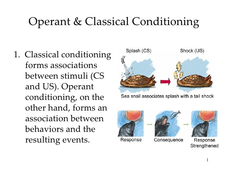 operant conditioning in media - Google Search | School Stuff ...