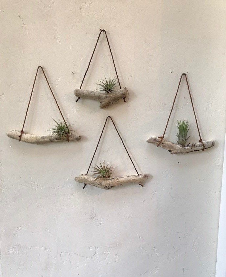 "Photo of Driftwood Air Plant Wall Art Holder ""Nautical Style"" Boho Style Beach Themed  Coastal Decor shabby chic"