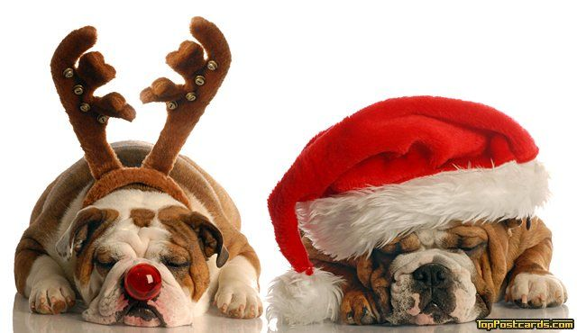 christmas is fast approaching and haven veterinary group are proud