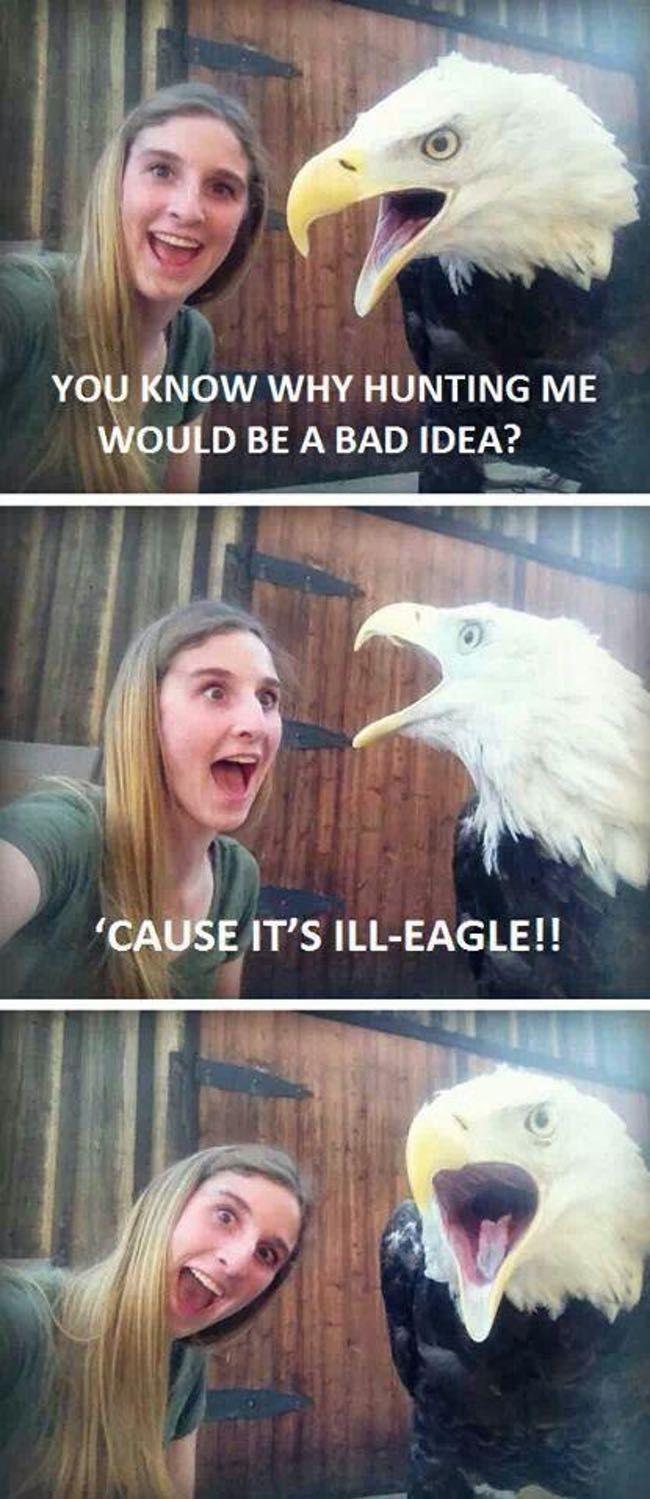 The Absolute Funniest Bird Puns Ever Funny Puns Best Puns Ever Puns Jokes