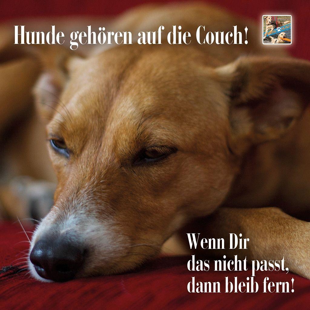 Ein Hund Mit Einem Kleinen Hund Auf Dem Ohr 3 Lustige Bilder