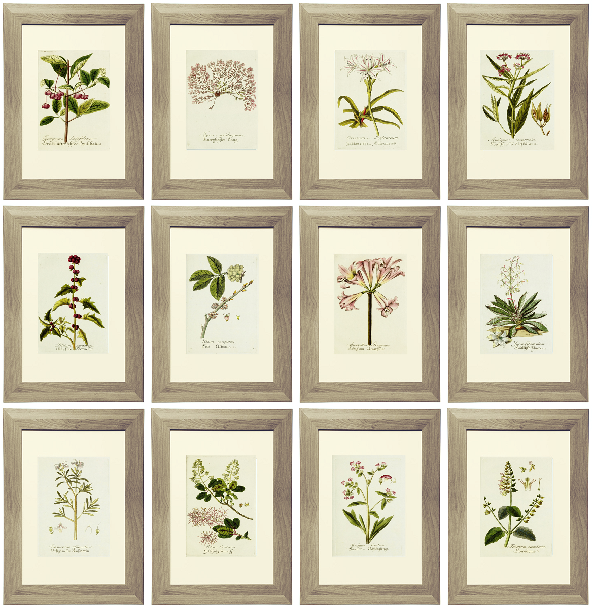 21 Free Lavender Botanical Printables Gallery Wall