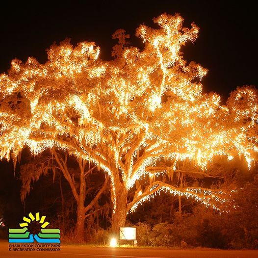 James Island Lights Prepossessing James Island County Park Holiday Festival Of Lights  Christmas Design Inspiration