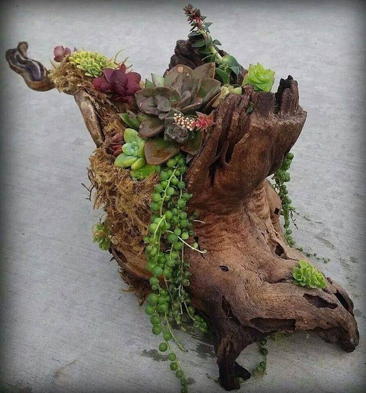 Suculenta en tronco seco crasas suculentas pinterest inspiration - Como decorar un arbol seco ...