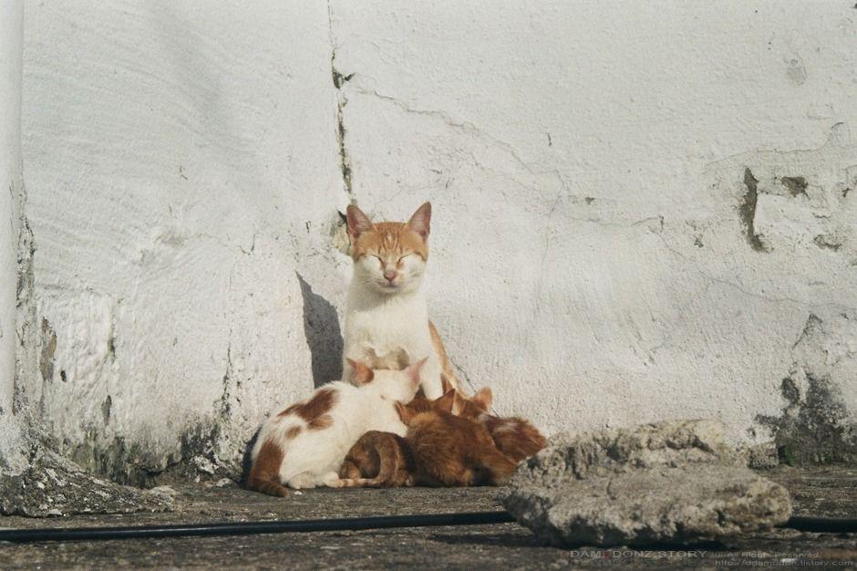 4 Brothers의 새끼들.. - ddamddon's story