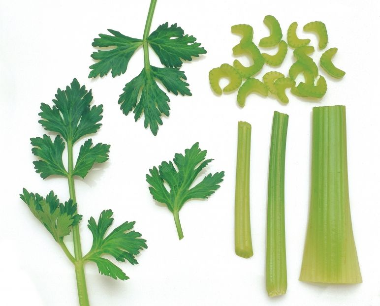 """""""Celery has a long history of use and is truly an ancient healing food. At first glance celery may seem rather unimpressive, but the more you look into its background and medicinal uses the more you realize that we must have been misinformed on the usefulness of this plant. """""""