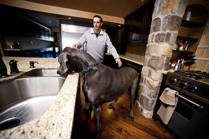 George, The #Largest #Dog in the #World.