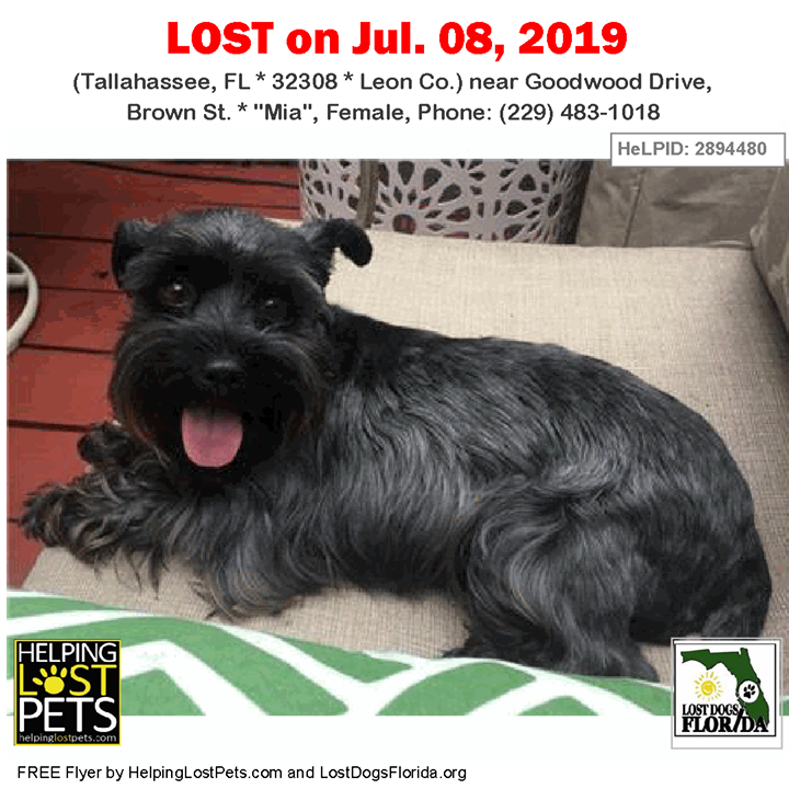 Lost Dog Have You Seen Mia Lostdog Mia Tallahassee Goodwood Drive Brown St Fl 32308 Leon Co Dog 07 08 2019 Femal Losing A Dog Dogs Losing A Pet