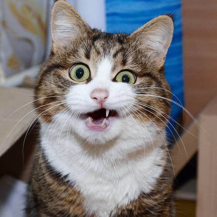 New Funny Pets Meet The Cat That Is Taking The Internet By Storm With His Funny Facial Expressions Despite The Fact That He Is Disabled Meet The Cat That Is Taking The Internet By Storm With His Funny Facia - Cats On Catnip 4