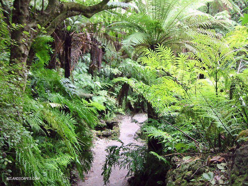 nz native garden ideas - Google Search | Garden landscape ...