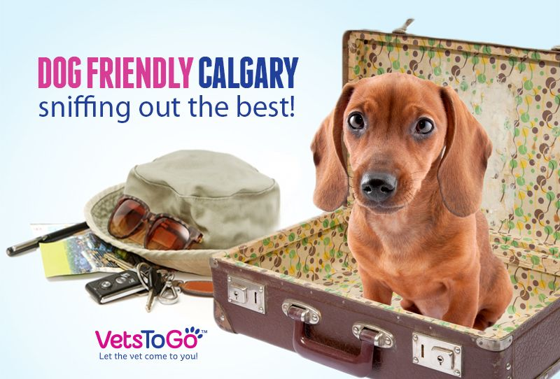 Dog Friendly Calgary Sniffing Out The Best Pet Friendly