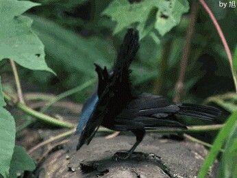Cool bird dance
