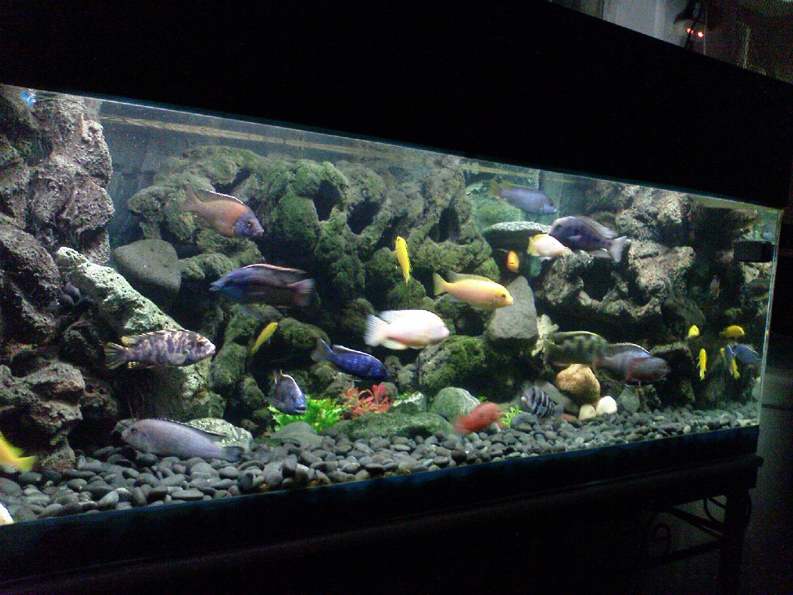 3d aquarium fish tank background feature rock - Turn Tiles Into A 3d Fish Tank Background Diy Techblogger