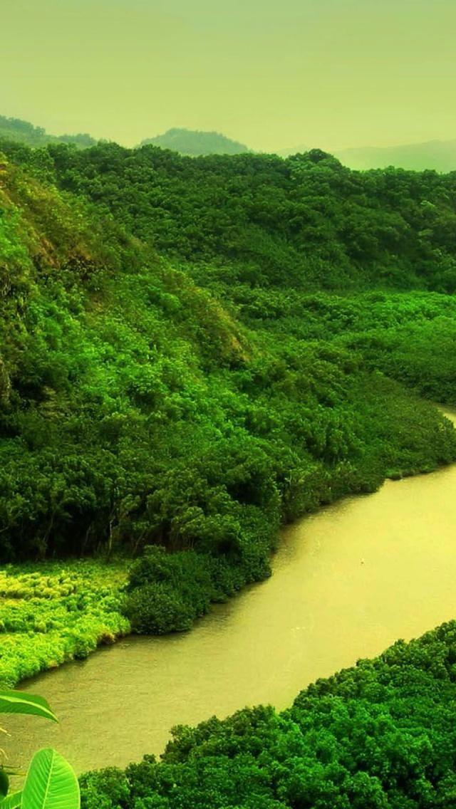 River Tropical Rainforest Natural Scenery Endroits A Visiter Arbre Lieux