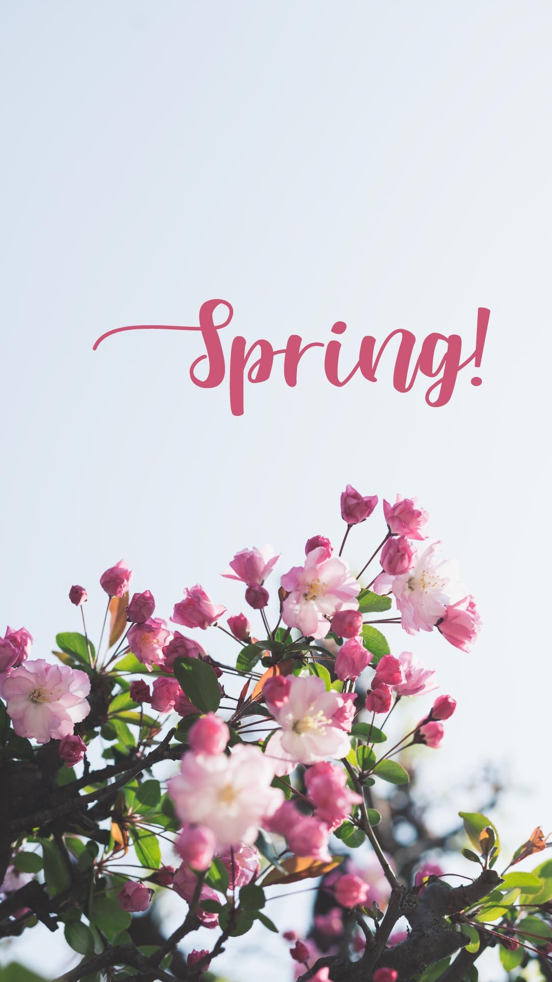 Spring Free Mobile Wallpaper For Iphone And Android Spring Wallpaper Mobile Wallpaper Android Wallpaper Free iphone wallpaper spring