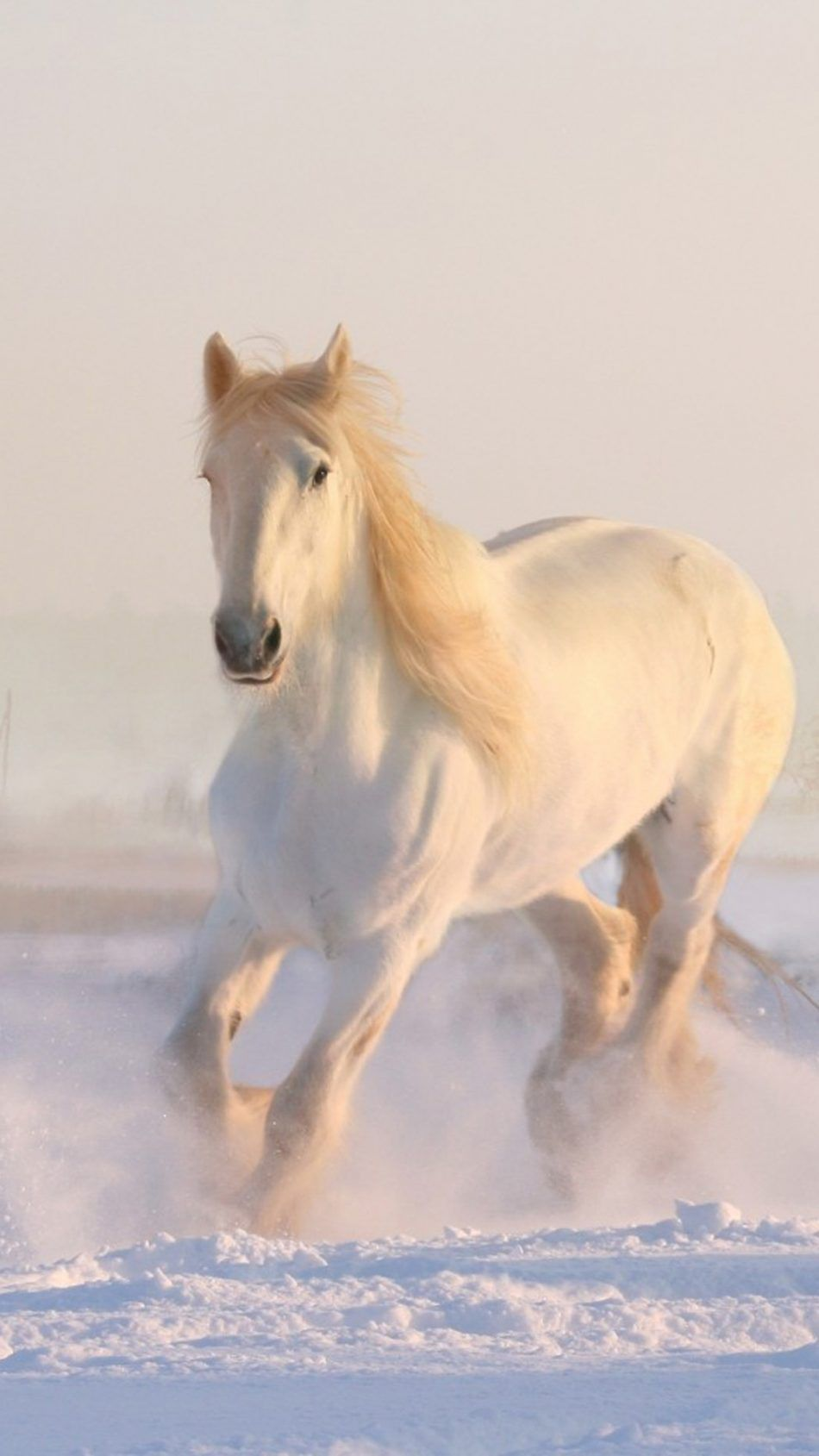 White Horse Running Winter Snow Hd Mobile Wallpaper Horses Beautiful Horses White Horse