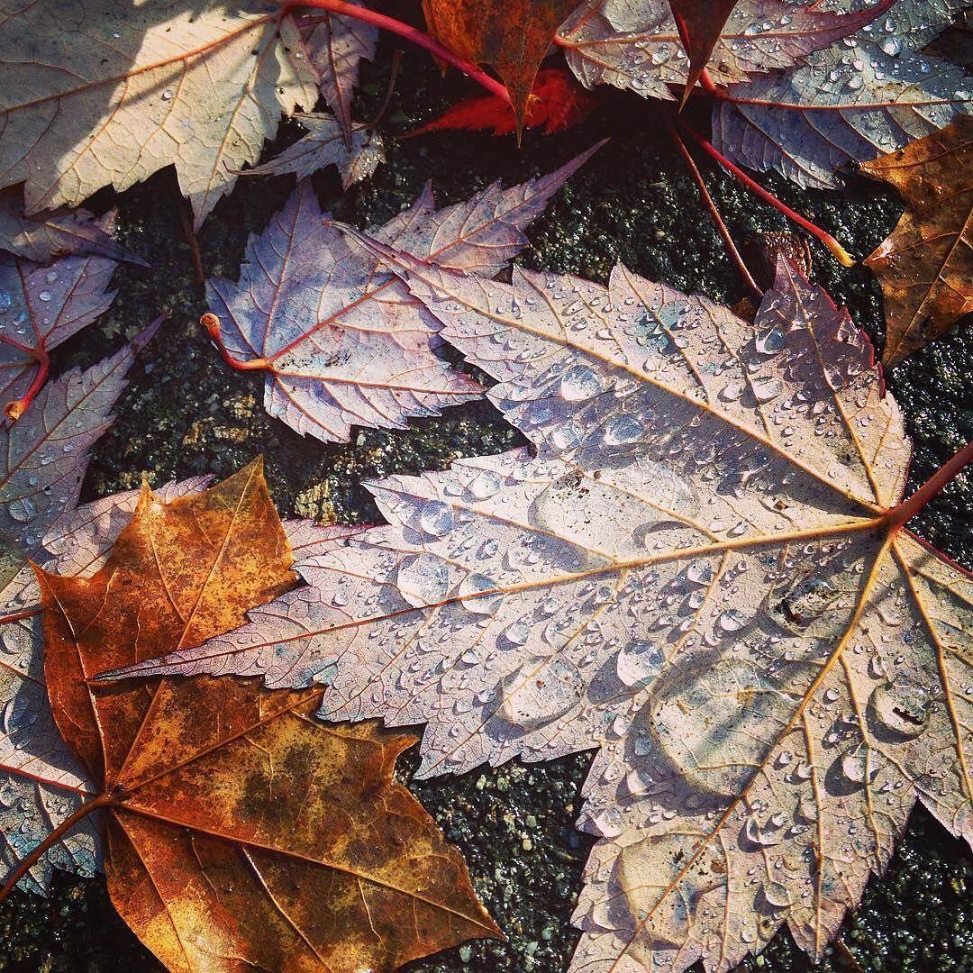 Current Mood /// Fall Feels . . . Beautiful 📷 via @melanie3ella