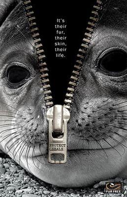No a la caza de focas!