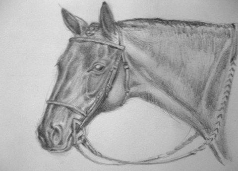 4.1.Sombras-luces-caballo
