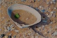 Sea Glass in a Shell (Sold) by Dan Brown