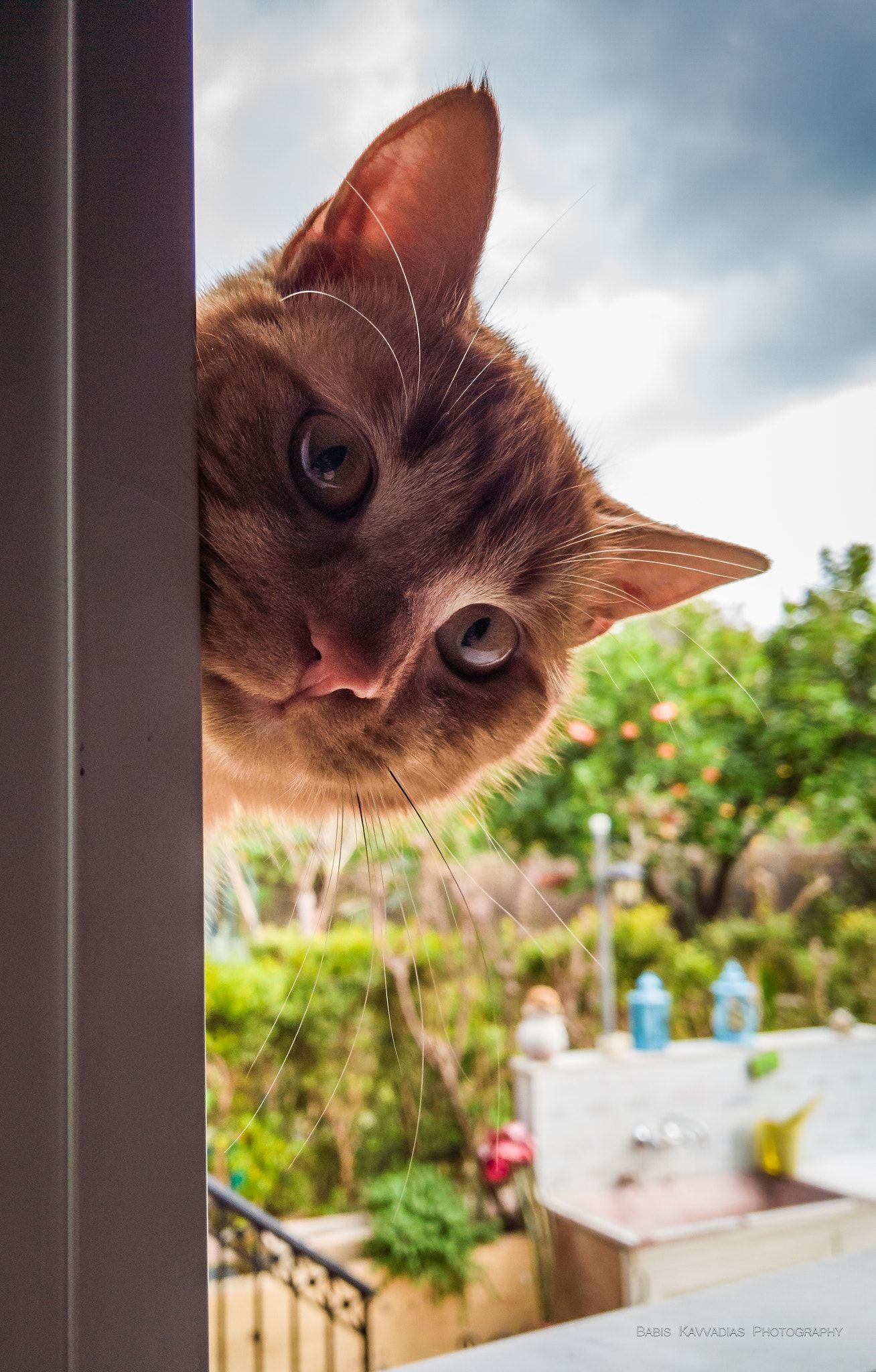 """""""Hello! May I come in?"""" Tigris, my cat, peeking inside"""