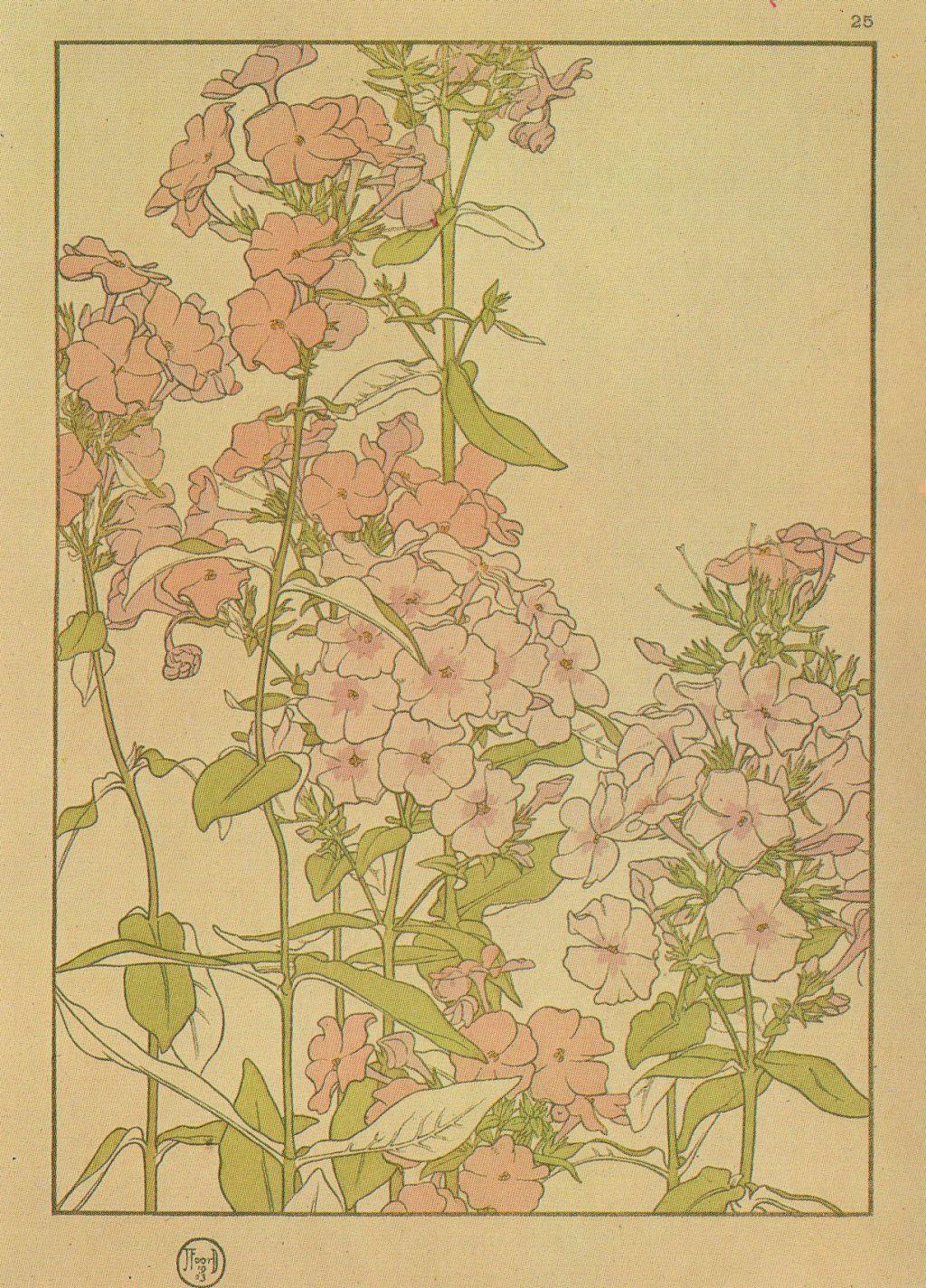 Phlox by Jeannie Foord ▫ Decorative Flower Studies Series / Pochoir Prints ▫ 1903