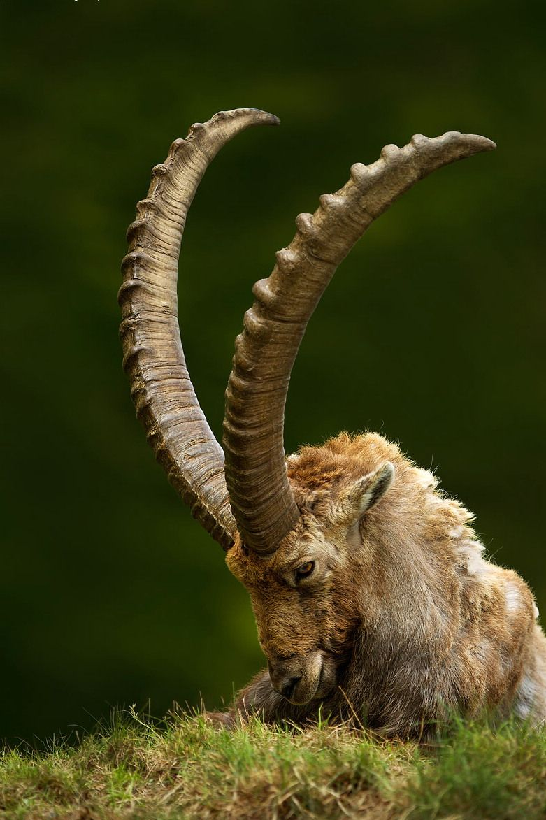 African mountain animals - Wildlife