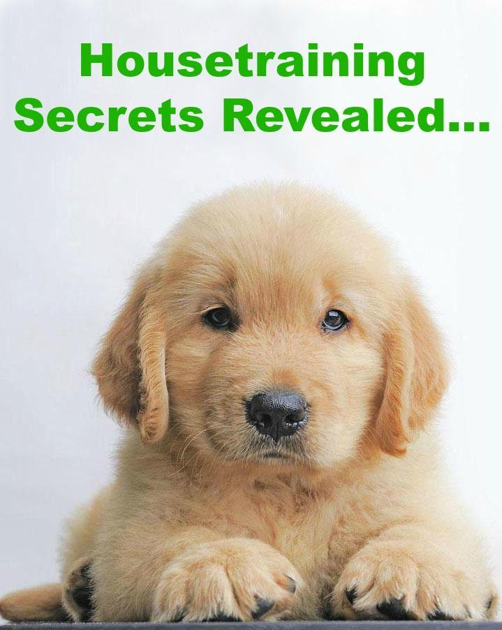 Doggy Dan S Kind Gentle Dog Training Method Dog Training