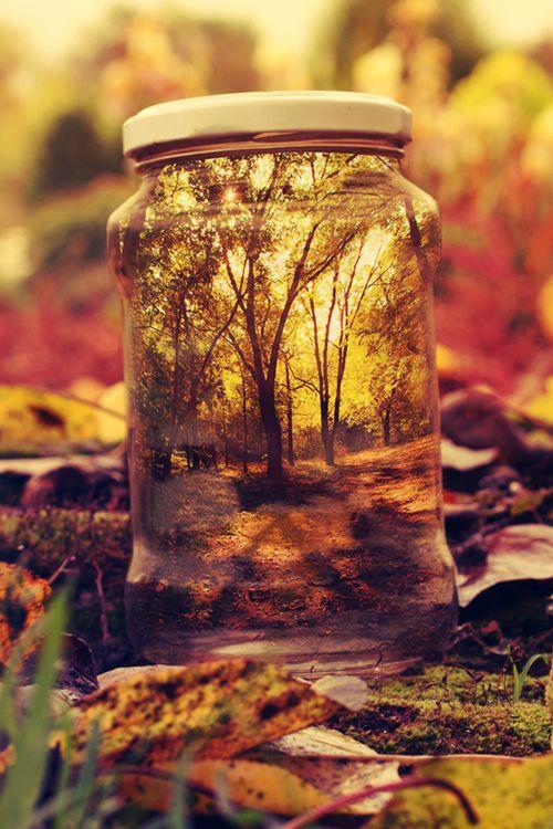 Plasmatics Life: A Wonderful Autumn Weekend   {by Tamás Mester} | {