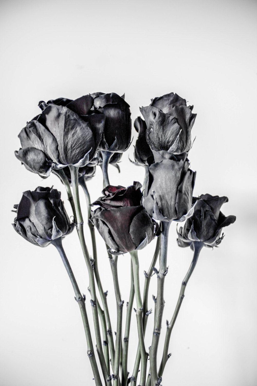 Rose Poster Print Black White Flower Flowers Roses