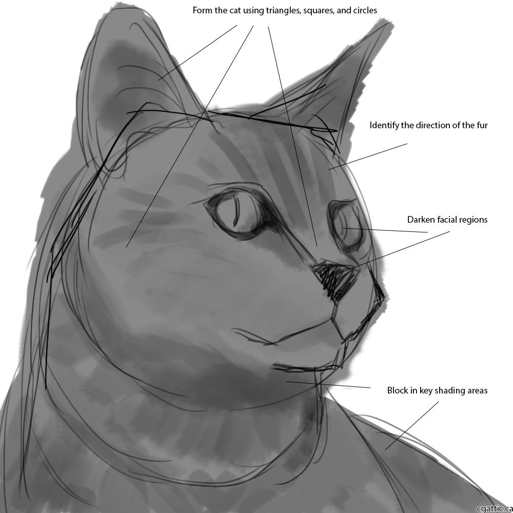 How to draw cats step 1 look for triangles circles and squares once the initial sketch is done create a layer underneath it and shade it in completely