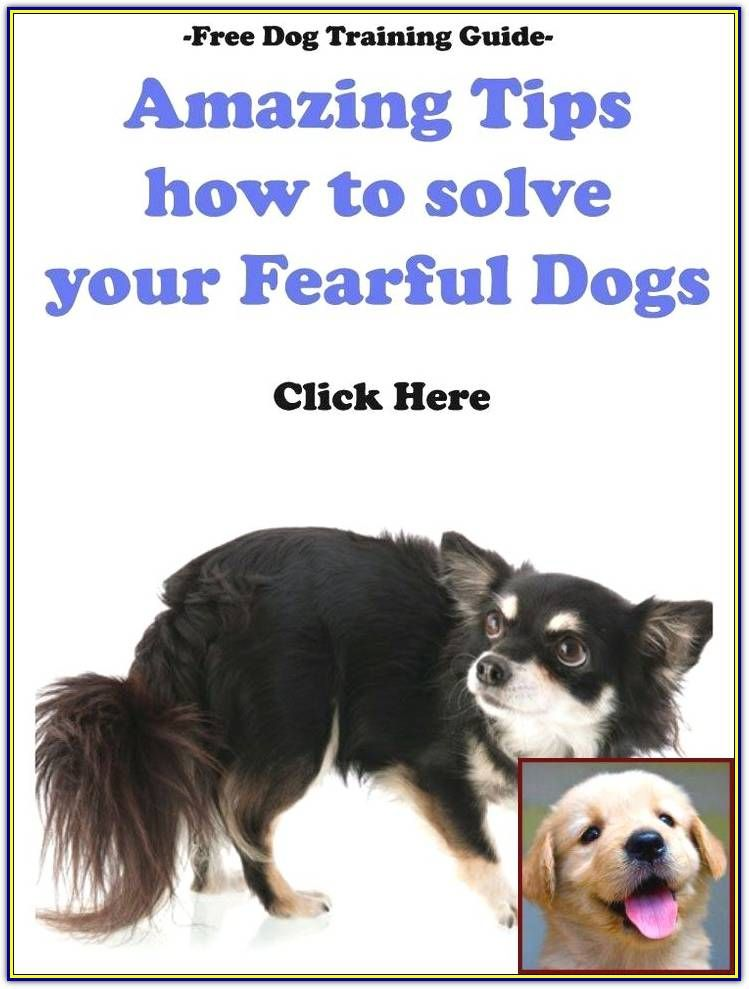 Effective And Easy Ways To Train Your Bad Dog Behavior Dog
