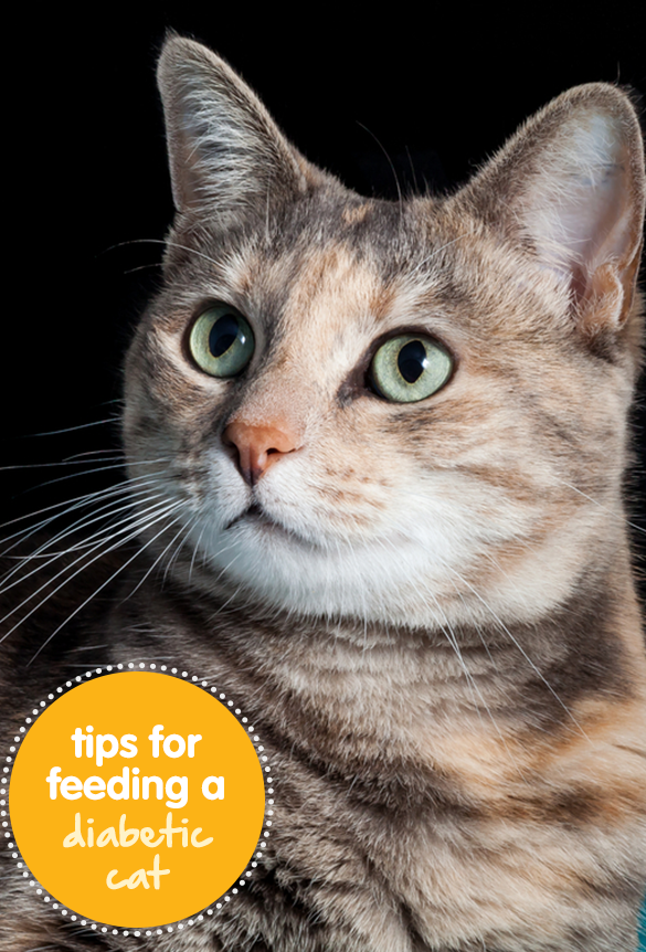 Tips For Feeding Diabetic Cats Pet Care Cats Pets Cats
