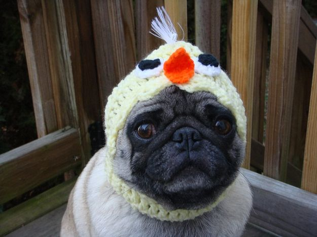 Pickles The Etsy Hat Model Baby Chicks Pugs In Costume Pugs
