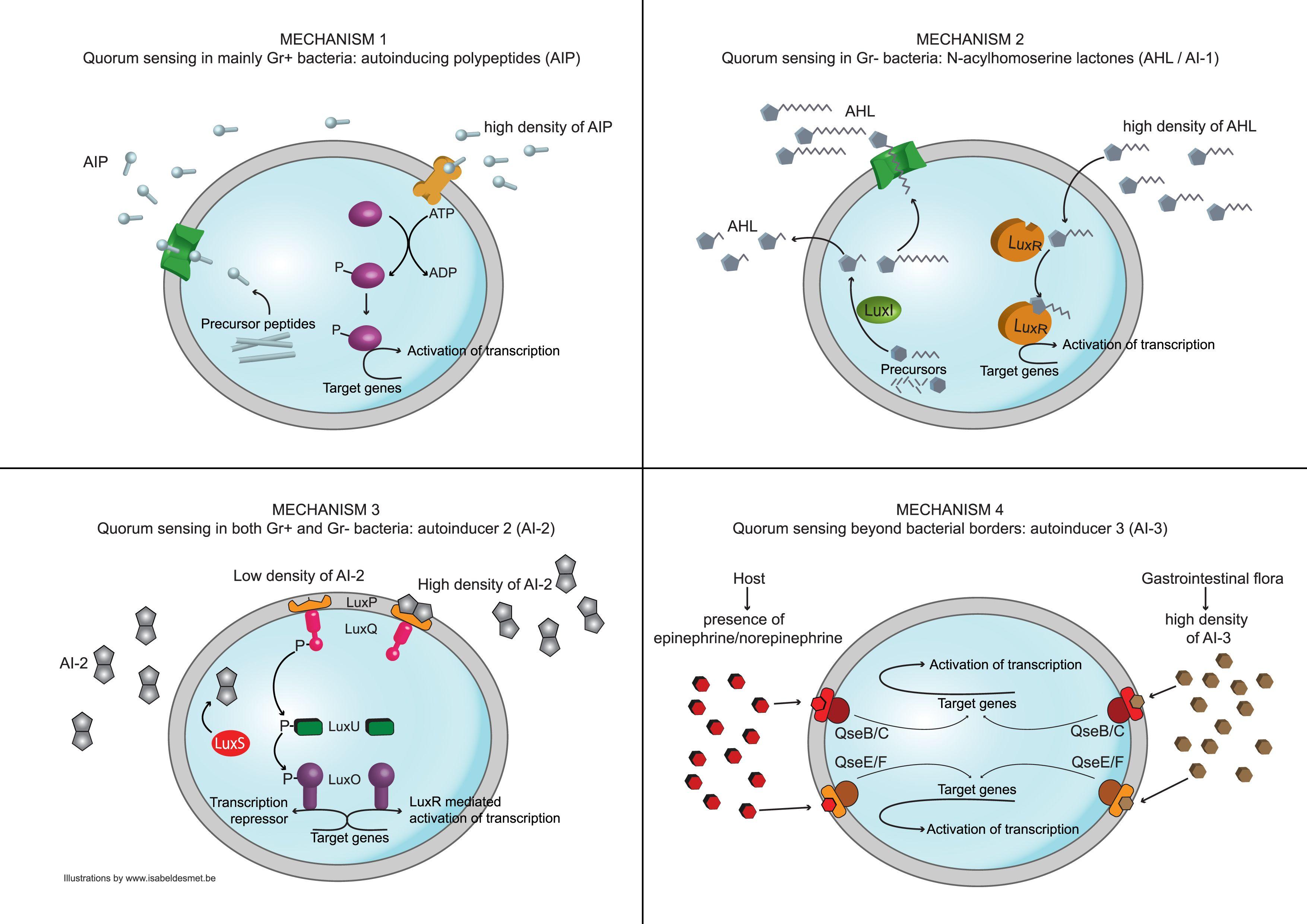 mechanisms of quorum sensing back to school pinterest molecular biology and school. Black Bedroom Furniture Sets. Home Design Ideas