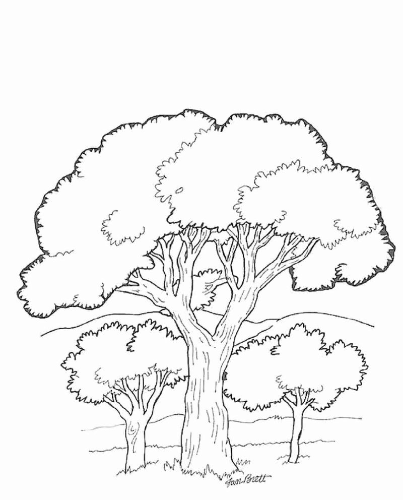 Palm Tree Coloring Page Awesome Page Coloring Outstanding Tree Branches Coloring Pages In 2020 Tree Coloring Page Christmas Tree Coloring Page Coloring Pages Winter