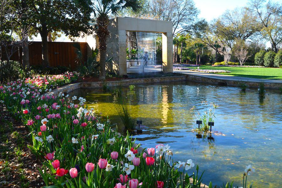 Dallas Arboretum Blooms Garden