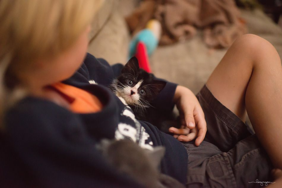 The Best Medicine {more of the kittens!} » This is Life. With Country Boys {Lacey Meyers Photography}