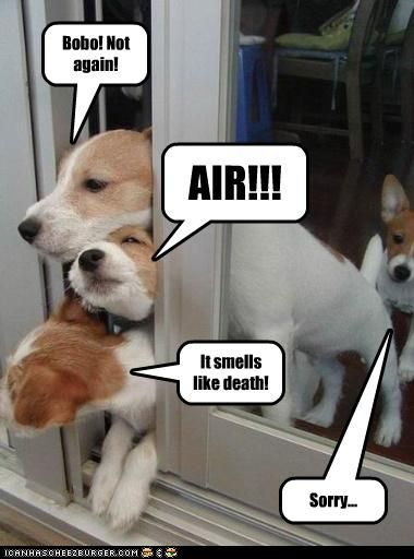 Funny Dog And Cat Photos With Captions 5 Funny Dog Captions
