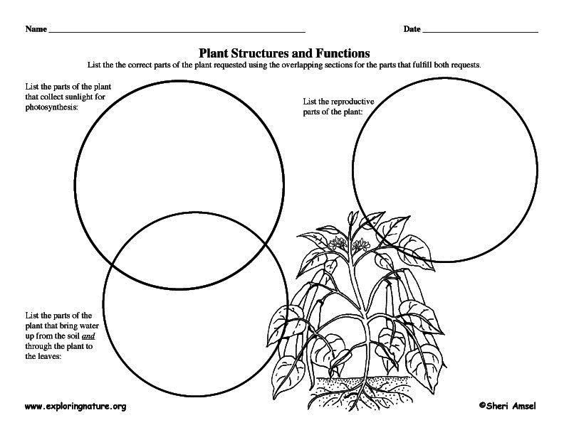 plant structures & functions   Third Grade Science and Social ...
