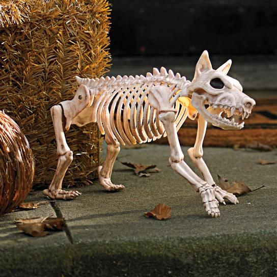 Sparky the Skeleton Dog on Leash Things Donning My Front Porch for