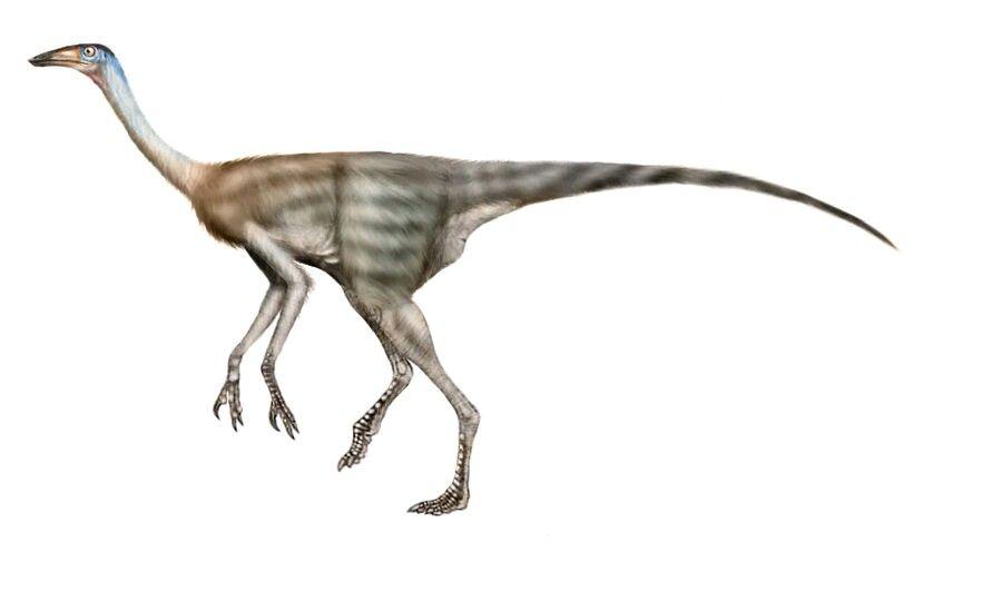 Resultado de imagem para struthiomimus