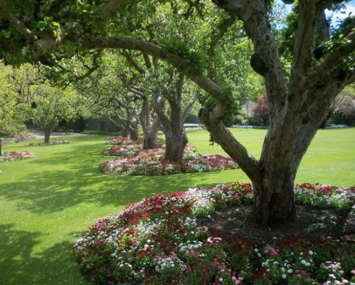 Perennials to plant around trees planting under trees for Plants around trees landscaping