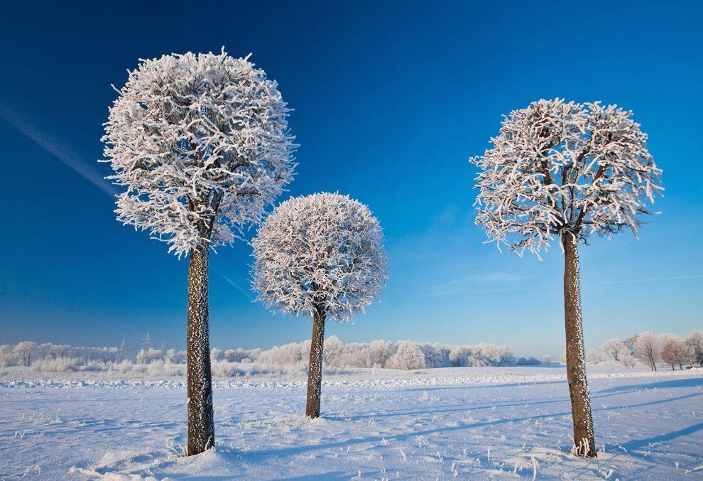 Winter Lollipops in Lithuania.