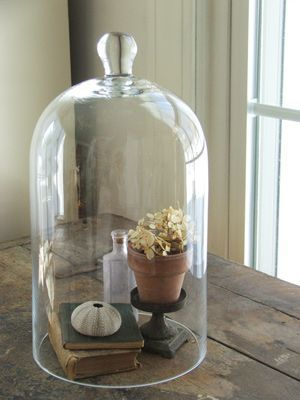 cloche en verre cabinet de curiosit pinterest glass
