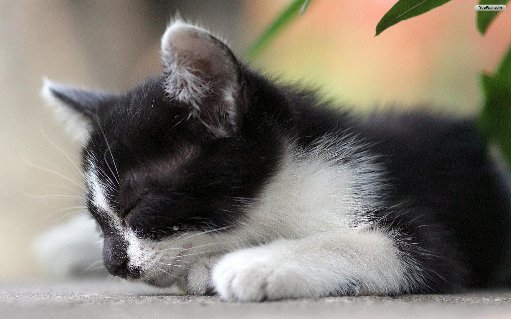 Beautiful Cat Wallpapers Hd Pictures One Hd Wallpaper Pictures
