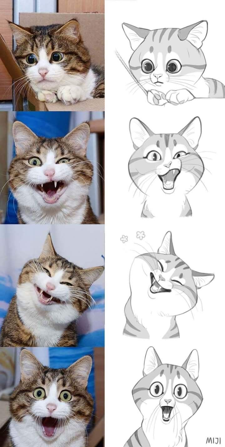 Die mimik der katze drawing in 2019 katze zeichnen - Dessin de chat kawaii ...